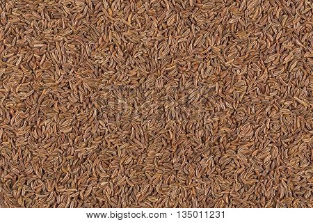 Close Up Caraway Seeds