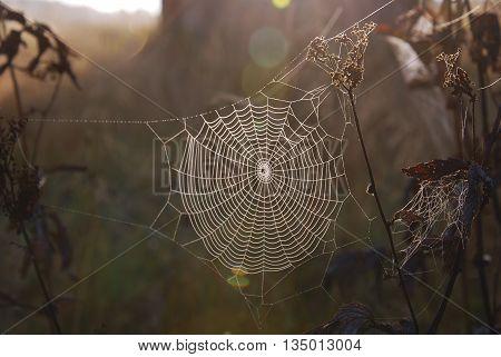 sun village early moning spiderweb оn field plants