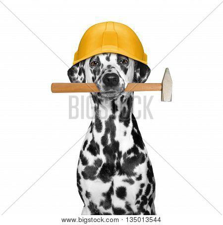 dog builder holding tools in its mouth -- isolated on white