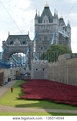 LONDON - OCTOBER 03: installation of 888246 ceramic poppies on October 3 2014 commemorating British and colonial military deaths in the First World War at the Tower of London UK.