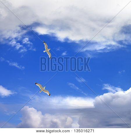 Two Seagulls Hover In Sky