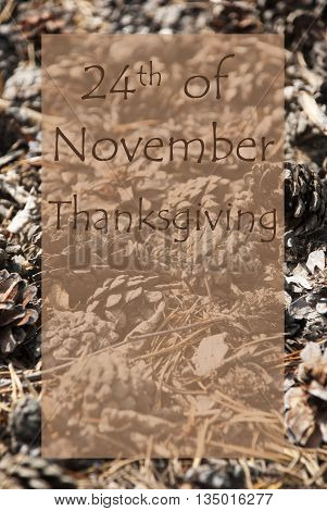 Vertical Texture Of Fir Or Pine Cone. Autumn Season Greeting Card With Copy Space For Free Text. English Text 24th Of November Thanksgiving
