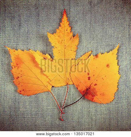 Toned Photo of the Autumnal Leaves on the Textile Background