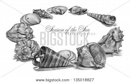 Frame with different seashells drawn by hand with pencil. Pencil sketch, academic drawing. Place for text. Summer sea theme