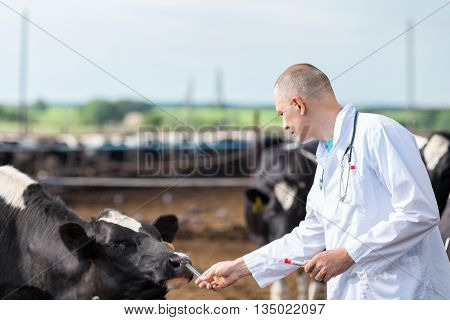 veterinarian in a white robe on cattle farm