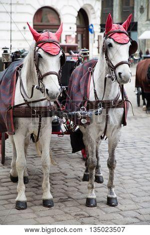 White Horses Vienna