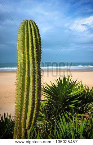 Early morning beach scene with a big cactus with spikes on the foreground