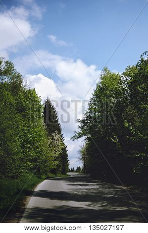 Beautiful road in the woods against the sky on a sunny day