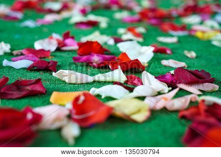 Red, white rose petals scattered on green carpet. Selective focus
