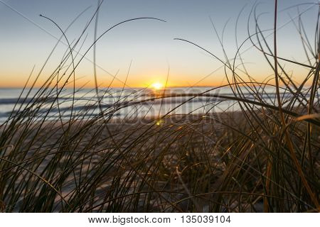 Papamoa beach, through the marram beach grass looking into sunrise
