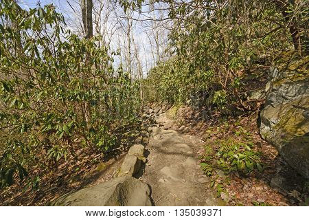Rocky trail into the Great Smoky Mountains in Tennessee