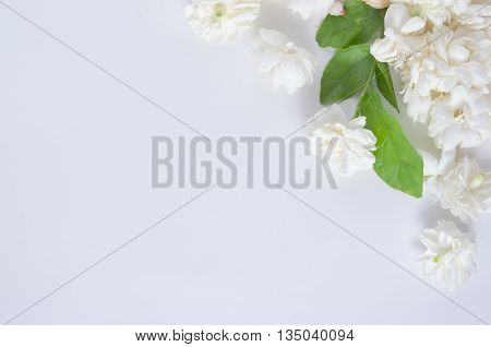 Jasmine (Other names are Jasminum Jasmine Melati Jessamine Jasmine Oleaceae) flowers put on white background