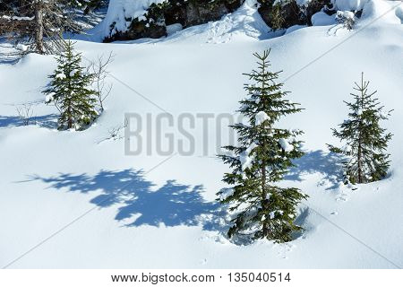 Winter snowy mountain hill with snowdrifts and small fir trees.