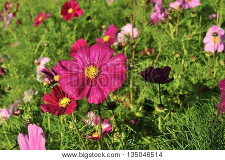 brightly colored flowers bloom in the morning sun.