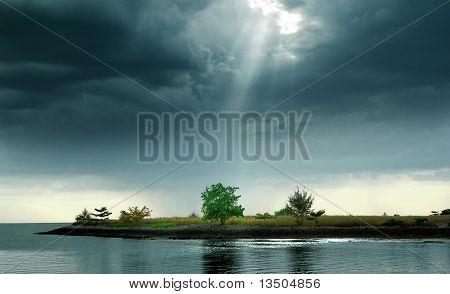 Jesus light shine on green tree