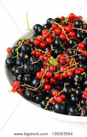 Black And Red Currant Berries