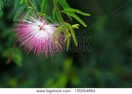 Flower And Nature On Summer Afternoon