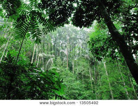 Grüner Tropenwald