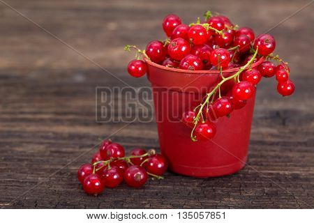 Red berries. Fresh ripe red currant berries.