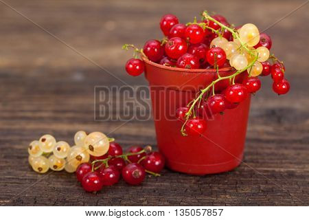 Berries. Fresh ripe currant berries. Red currant. White currant.