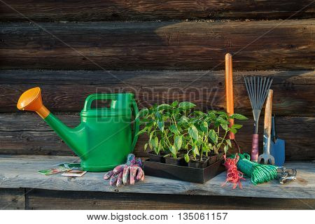 Gardening tools and seedling on the wooden background outdoor
