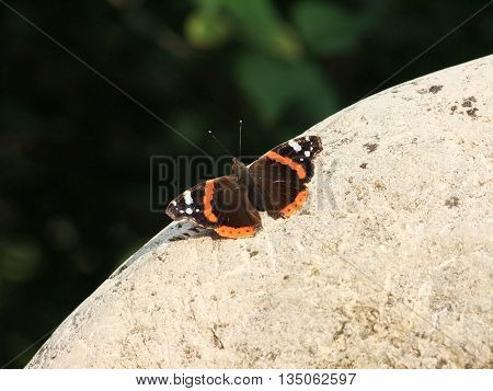 butterfly sits on a white stone in the garden