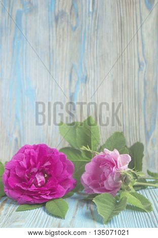 Pink rose flower on wooden table, rustic background. Selective focus, tender romantic background. Place for text, decoration with rose. Design for greeting card, Valentine's day, birthday