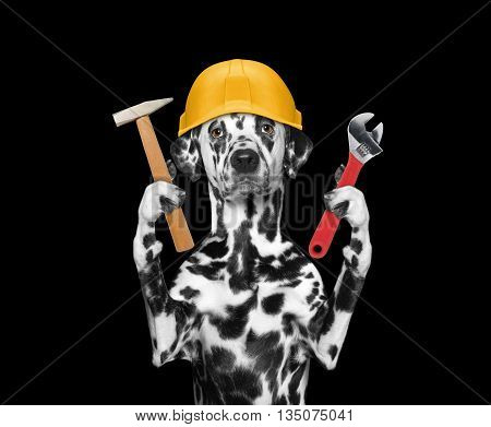 dog builder holding tools in its paws -- isolated on black
