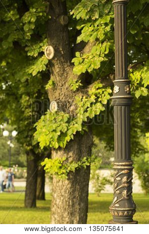 Lamppost and tree in the park. Metal and nature background.