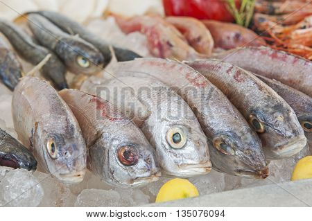 Collection Of Bream Fish On Display In Seafood Restaurant