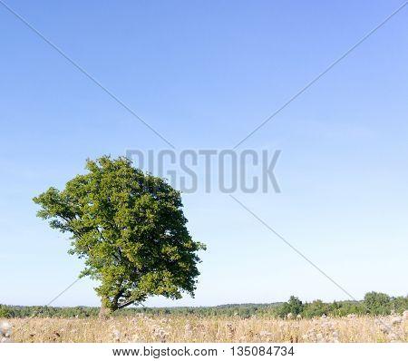 Fresh Landscape Plain Nature