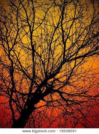 rama de árbol Calvo al atardecer