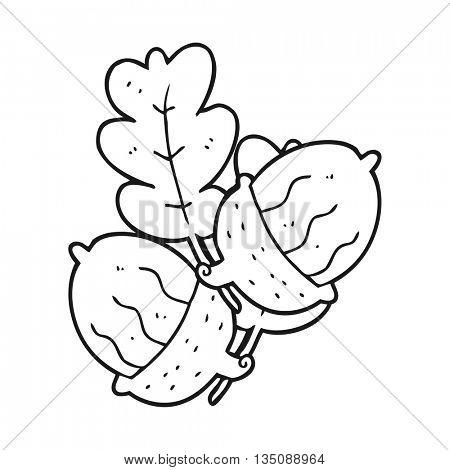 freehand drawn black and white cartoon acorns