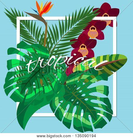 Tropical leaves. Floral design background. tropical plants