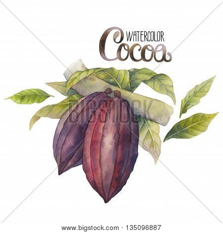 Watercolor cocoa fruits isolated on white background. Hand drawn exotic cacao plants in different color