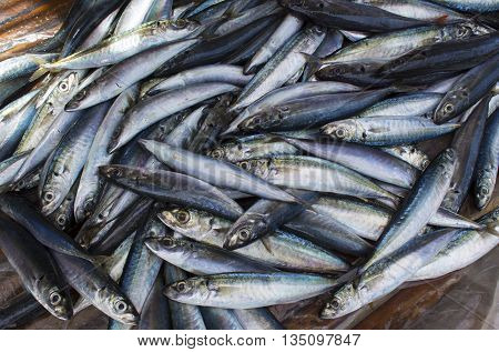 Small fishes on the wooden table, sea fish mackerel pile