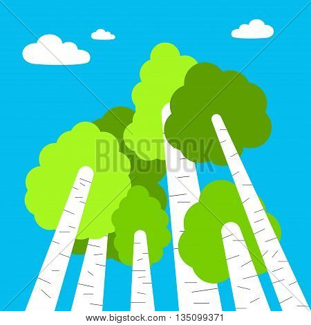 Birch trees top view. Birch trees cartoon style