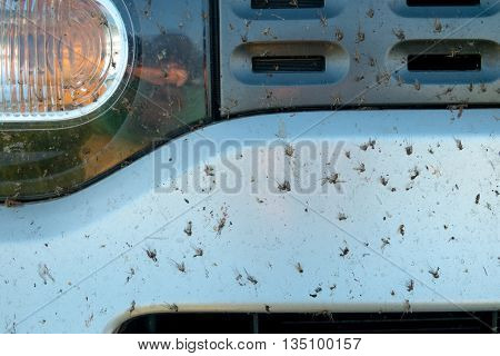 Crushed insect on car bumper. Crush the mosquitoes and gnats at the front of the vehicle