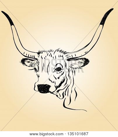 sketch of a cow's head with large horns on a light background