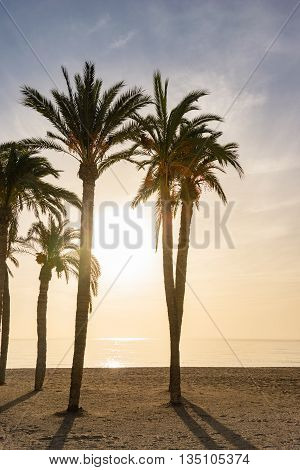 Some palm trees at a beach in Spain which are backlit from a wonderful colorful sunset over the Mediterranean Sea