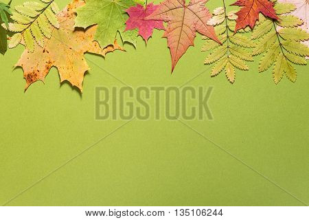 colorful dried autumn leaves on a green background