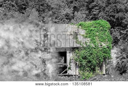 Partial black and white image of an abandoned wooden house in the forest half covered in green ivy vines desintegrating in small particles.