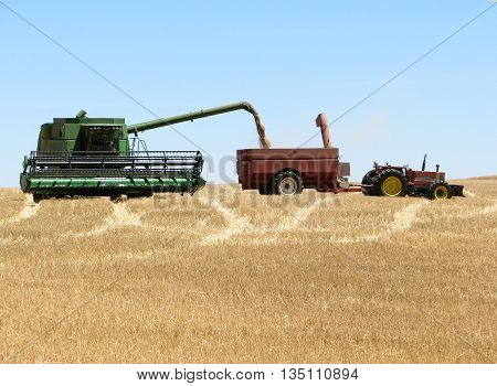 Harvesting Wheat, West Coast South Africa 02