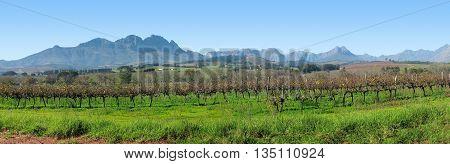 Stellenbosch Grape Farm, Cape Town South Africa 19