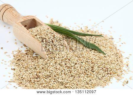 Organic unpeeled white sesame seeds. White sesame seeds in wooden spoon. Sesame seeds on white background.