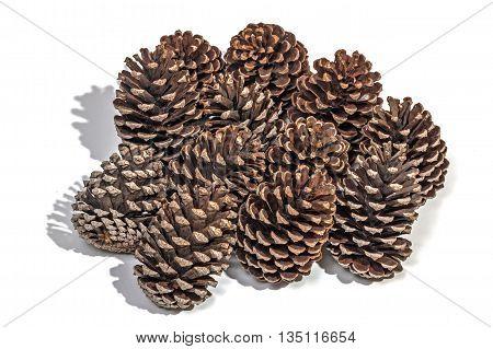 Studio Shot Of Twelve Aged Pine Cones On White