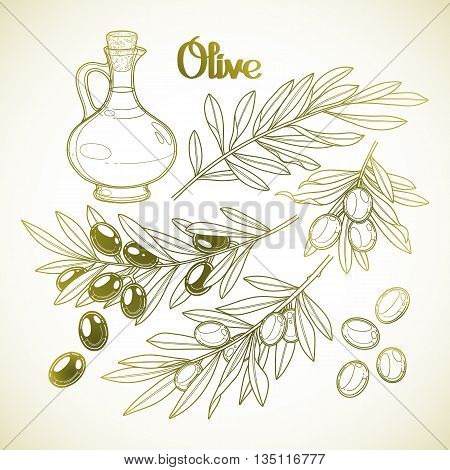 Graphic olive collection isolated on white background. Olives on the branches. Olive oil in the glass bottle. Vector natural design