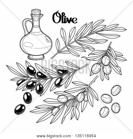 Graphic olive collection isolated on white background. Olives on the branches. Olive oil in the glass bottle. Vector natural design. Coloring book page design for adult and kid