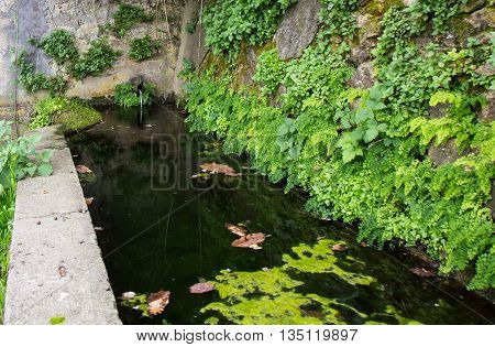 Old fountain or lavatory or watering hole for animals seeds covered with grass and MOSS