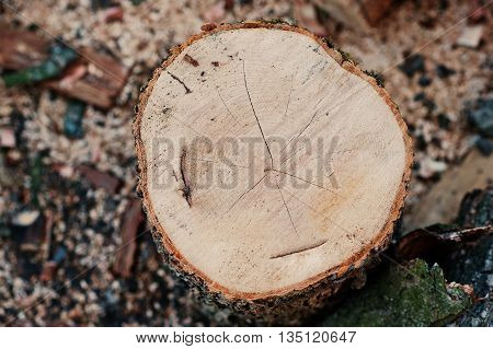 Round firewood stump close up at outdoor